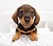 PUP 28 YT0003 01