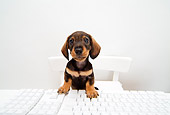 PUP 28 YT0005 01