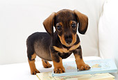 PUP 28 YT0009 01