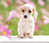 PUP 28 YT0013 01