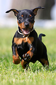 PUP 29 AC0001 01
