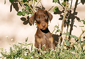 PUP 29 CB0001 01