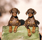 PUP 29 CB0002 01