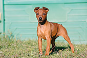 PUP 29 CB0003 01