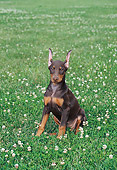 PUP 29 FA0004 01