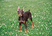 PUP 29 FA0005 01