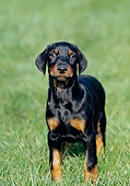 PUP 29 GL0001 01