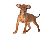 PUP 29 JE0001 01