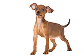 PUP 29 JE0002 01