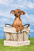 PUP 29 JE0003 01