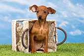 PUP 29 JE0004 01