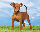 PUP 29 JE0005 01
