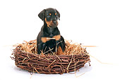 PUP 29 PE0001 01