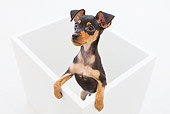 PUP 29 YT0001 01