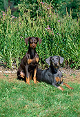 PUP 29 CE0001 01