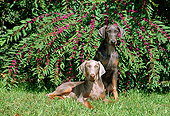 PUP 29 CE0002 01