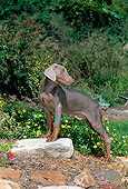 PUP 29 CE0004 01
