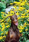 PUP 29 CE0005 01