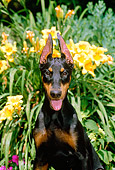 PUP 29 CE0006 01
