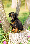 PUP 29 CE0007 01