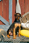 PUP 29 CE0008 01