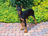 PUP 29 FA0003 01