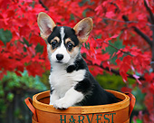 PUP 30 BK0001 01