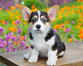 PUP 30 BK0003 01