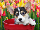 PUP 30 BK0004 01