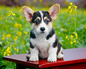 PUP 30 BK0006 01