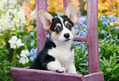 PUP 30 BK0007 01