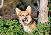 PUP 30 CB0001 01