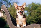 PUP 30 CB0005 01