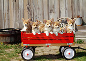 PUP 30 CE0024 01