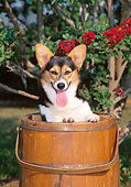 PUP 30 CE0027 01