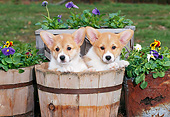 PUP 30 CE0028 01