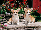 PUP 30 CE0029 01