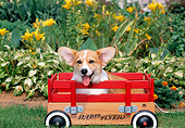 PUP 30 CE0032 01