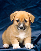 PUP 30 GL0001 01