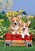 PUP 30 CE0007 01