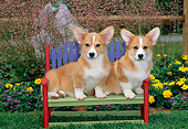 PUP 30 CE0008 01