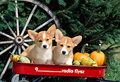 PUP 30 CE0010 01