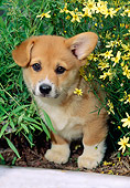 PUP 30 CE0013 01