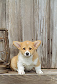 PUP 30 CE0014 01