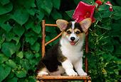 PUP 30 CE0015 01