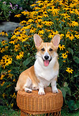 PUP 30 CE0016 01