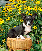 PUP 30 CE0017 01