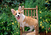 PUP 30 CE0018 01