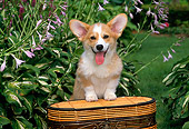 PUP 30 CE0019 01