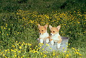 PUP 30 DC0004 02